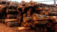 Cypress sawmill to double output