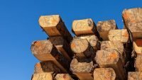 NZ Council writes off $800k on failed timber mill