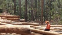 Resource security for SEQ hardwood industry