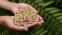 Bright future for sustainable wood pellets