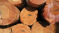 Why NZ's wood processors are under stress