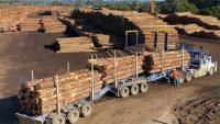 New AU$4.5 million sawmill for South Australia