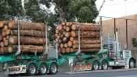 Extra sawlogs in NSW for domestic processing